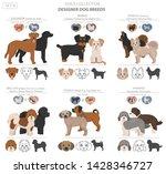 designer dogs  crossbreed ... | Shutterstock .eps vector #1428346727