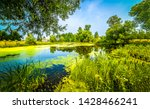 Summer green duckweed pond landscape. Summer duckweed pond view. Summer green water pond. Duckweed pond in summer