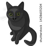 black cat. vector illustration. ... | Shutterstock .eps vector #1428605204