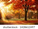 autumn landscape. fall scene....   Shutterstock . vector #1428612497
