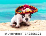 Stock photo french bulldog puppy in mexican sombrero on the beach 142866121