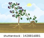 propagation by layering.... | Shutterstock .eps vector #1428816881