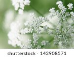 Bush Of White Flowers