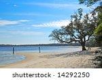 Stately Oak Tree On Beach Next...