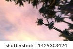 sundown sky with tropical palm... | Shutterstock . vector #1429303424