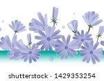 chicory flowers vector seamless ... | Shutterstock .eps vector #1429353254