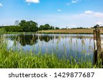 Pond With High Grass And An...