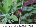 Stock photo a dragonfly perched on a green tree 1430062301