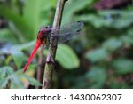 Stock photo a dragonfly perched on a green tree 1430062307