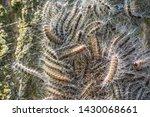 Nest of many oak process...