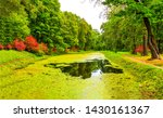 autumn forest duckweed river... | Shutterstock . vector #1430161367
