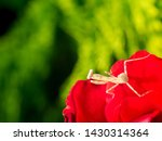 The Little Grasshopper Standin...