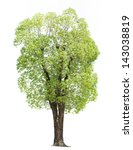 tree isolated against a white... | Shutterstock . vector #143038819
