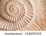 Closeup Of Ammonite Prehistori...