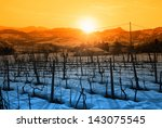 Snowy Vineyard In Winter At...
