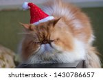 Persian Cat Wearing A Red Hat...