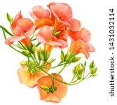Campsis Tropical Flowers ...