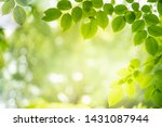 Green Nature Background....