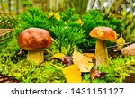 Autumn Forest Mushrooms Scene....