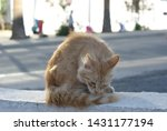 wild cat cleaning on the street ... | Shutterstock . vector #1431177194