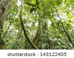large rainforest tree with... | Shutterstock . vector #143122405