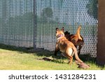 yuma sector  ariz.   us   april ...   Shutterstock . vector #1431284231