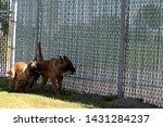 yuma sector  ariz.   us   april ...   Shutterstock . vector #1431284237