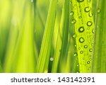 Close Up Of Nature Fresh Green...