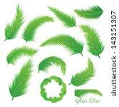 coconut leaf  vector set | Shutterstock .eps vector #143151307