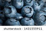 blueberry background macro... | Shutterstock . vector #1431555911