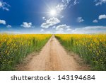 Road In The Yellow Flower...