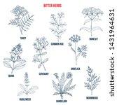 bitter herbs collection. hand... | Shutterstock .eps vector #1431964631