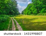 Path In Dutch Forest With A...
