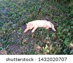 Stock photo tired red cat lying on the grass 1432020707