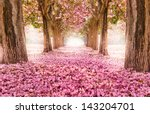 the romantic tunnel of pink... | Shutterstock . vector #143204701