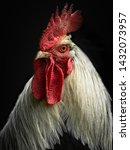 A Rooster Chicken Portrait....