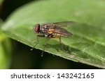 fly sits on a green leaf closeup | Shutterstock . vector #143242165