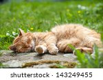 Red Domestic Cat Lying In A...