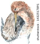 Black Tailed Godwit. Watercolor ...