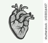 vector engraved style... | Shutterstock .eps vector #1433016437