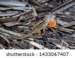 Brown Florida Reptile Stands...