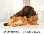 Stock photo cat and dog together on floor indoors fluffy friends 1433171621
