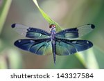Stock photo dragonfly with beautiful wing 143327584