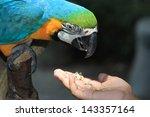 Stock photo children feeding a parrot 143357164