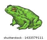 Hallucinogenic Frog Toad Animal ...