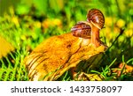Stock photo snails on mushroom scene two snails on mushroom two snails on mushroom top snail on mushroom 1433758097