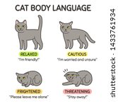 cat body language infographic... | Shutterstock .eps vector #1433761934