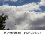 Skydivers Landing at Dillingham Air Field