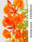 beautiful peacock flower on... | Shutterstock . vector #143438161