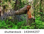 Storm Damage. Fallen Trees In...
